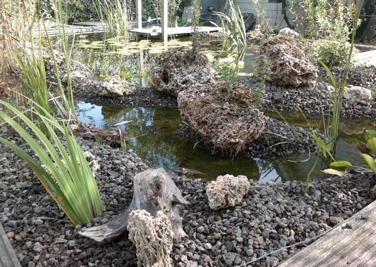 Plantes étang avec lampe UV supplémentaire